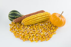 Ear of corn with loose kernels and gourds Stock Photo