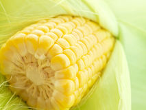An ear of corn macro Stock Photos