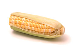 Ear of Corn Over White. An ear of corn over white Royalty Free Stock Photo