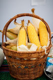 Ear of corn, revealing yellow kernels, photo of maize in a wicker basket Royalty Free Stock Photography