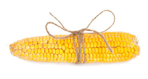 Ear of corn with rope Royalty Free Stock Photos