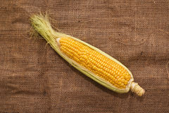 Ear of corn on sack texture Stock Images