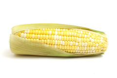 Ear of corn on white. Picture of a ear of corn on white Royalty Free Stock Images