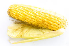 Ear of corn. On a white background Royalty Free Stock Photos