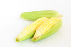 Ear of Corn on a white background. Fresh ear of corn isolated on white background royalty free stock images