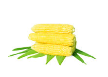 Ear of corn Royalty Free Stock Photo