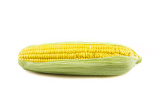 Ear of corn on a white background Stock Image