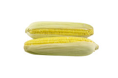 Ear of corn on a white background Royalty Free Stock Image