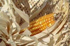 Ear of corn. In a wicker basket royalty free stock image