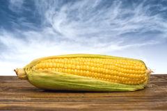 Ear of corn on wooden table Stock Photography