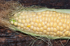 Ear of corn or Zea Stock Image