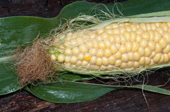 Ear of corn or Zea Royalty Free Stock Photography