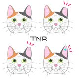 Ear cut cat, TNR. Cat which got her ear cut for TNR action royalty free illustration