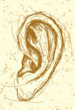 Ear Drawing Stock Images