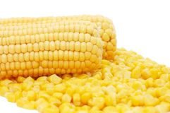 Ear of fresh corn Royalty Free Stock Images