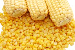 Ear of fresh corn and tinned corn Stock Image