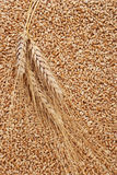 Ear and grain of the wheat Royalty Free Stock Images