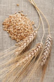 Ear and grain of the wheat Stock Images
