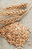 Ear and grain of the wheat royalty free stock photography