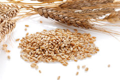 Ear and grain of the wheat Stock Photos