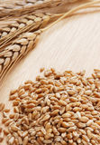 Ear and grain of the wheat Stock Photos