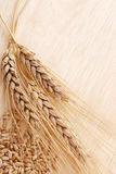 Ear and grain of the wheat Royalty Free Stock Image