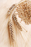 Ear and grain of the wheat Stock Photography