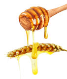 Ear and honey Stock Photos