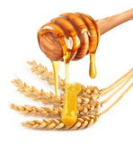 Ear and honey Stock Photography