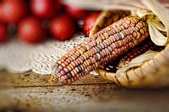 Ear of Indian corn in basket Royalty Free Stock Photos