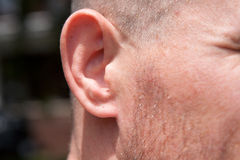 Ear. A mans ear with an attached lobe and hole for earring Royalty Free Stock Photos