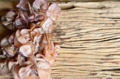 Ear mushroom Royalty Free Stock Image