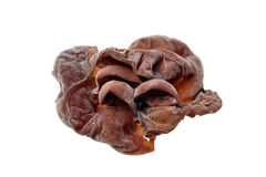 Ear mushrooms Stock Image