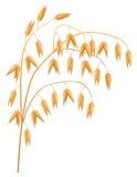 Ear of oats. Ear of oats on a white background. Vector illustration Vector Illustration