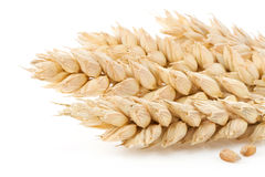 Ear Of Wheat On White Stock Photo