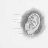 Ear pencil drawing Royalty Free Stock Photos
