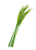 Ear of rice Stock Images