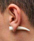 Ear Ring Tusk Stock Photos