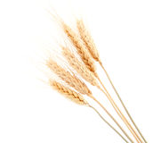 Ear of rye Royalty Free Stock Photography