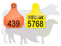 Ear Tags & Farm Animals Stock Photos