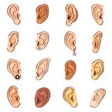 Ear vector human eardrum ear rope hearing sounds or deafness and listening body part illustration sensory set female. Ears with earrings ear-rings isolated on royalty free illustration