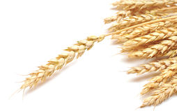 Ear wheat Stock Photography