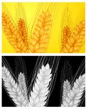 Ear wheat background Royalty Free Stock Images