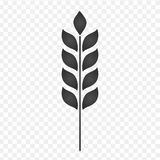Ear of Wheat, Barley or Rye visual graphic icon, i vector illustration