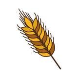 Ear of wheat Stock Photos