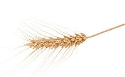 Ear of wheat isolated Royalty Free Stock Photos