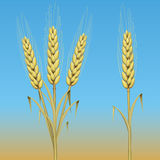 Ear of wheat. Isolated on black background stock illustration
