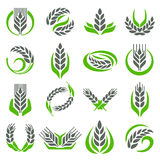 Ear wheat isolated vector. Royalty Free Stock Image