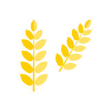 Ear wheat isolated vector. Stock Image