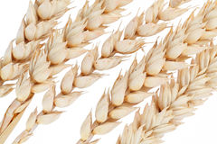 Ear of wheat isolated Stock Photography